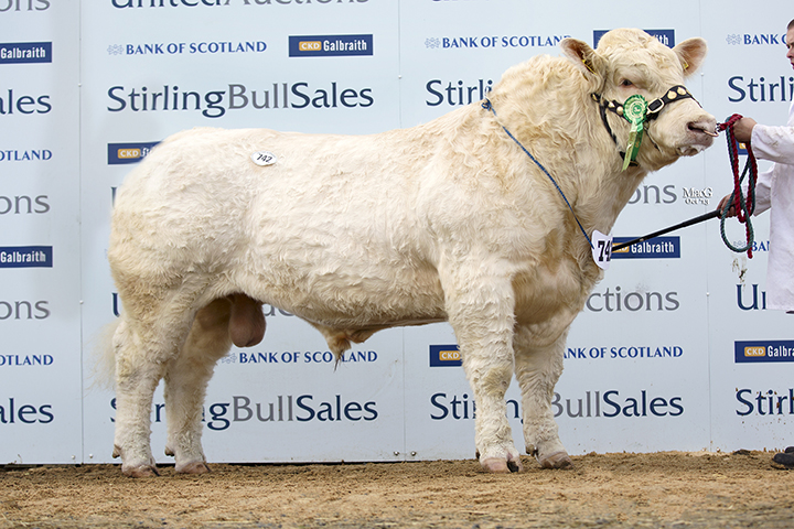 Balmyle Headline at 22,000gns