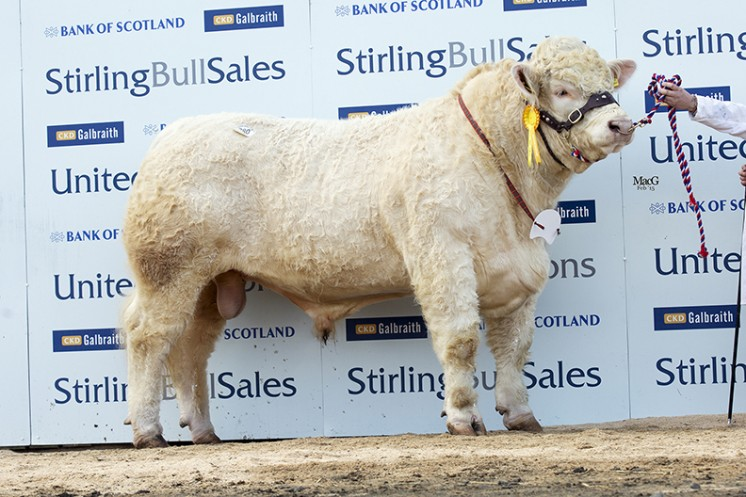 Balthayock Ignatius at 10,000gns