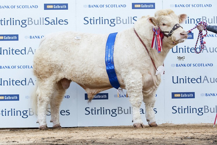 Balthayock Imperial the Senior Champion at 11,000gns