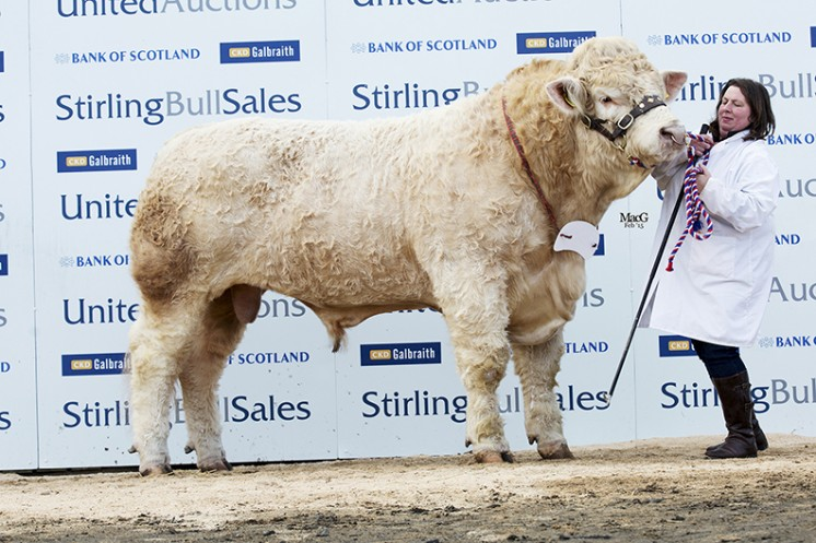 Balthayock Impulse at 9,000gns