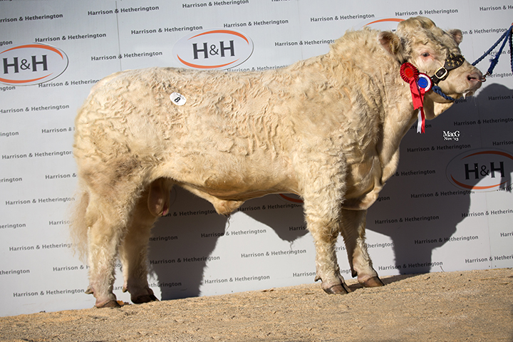Bassett Hallmark the Overall Male Champion at 6,000gns