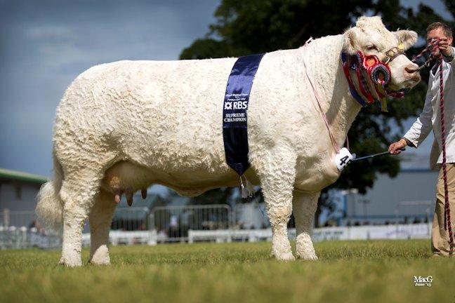 Elgin Catherine the RHAS 2013 inter breed champion