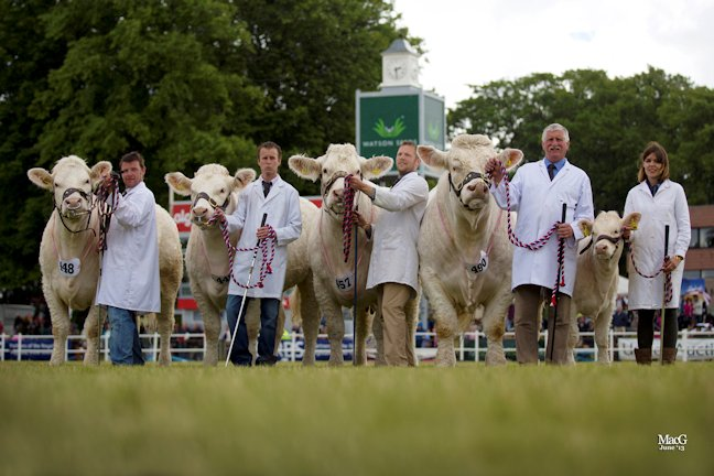 "The Charolais Interbreed Champion ""Group of Four"" winner from the left, Inverlochy Gloria (Raymond Irvine), Glenericht Gem (Alan Drysdale Elgin Catherine (Matthew Milne) Maerdy Grenadier (Jim Muirhead) and Elgin Iona (Caroline Milne)"