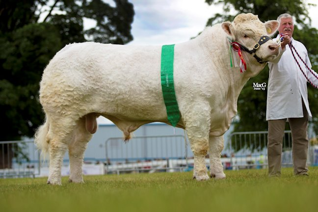 Beef Breeder Continental Charolais, Maerdy Grenadier
