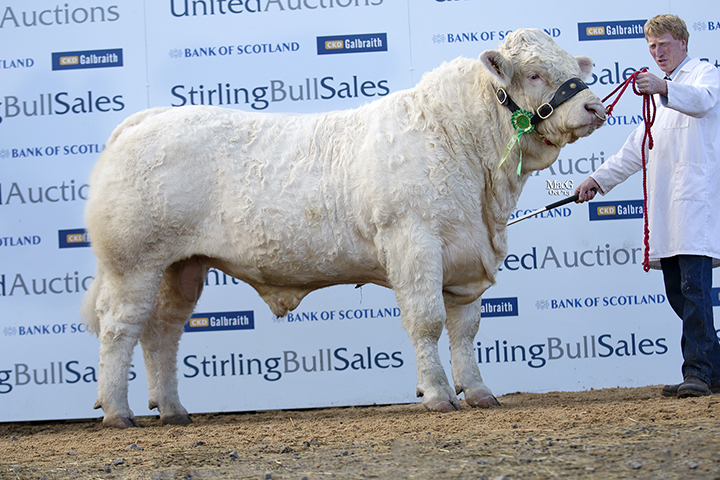 Blelack Highlander at 10,000gns