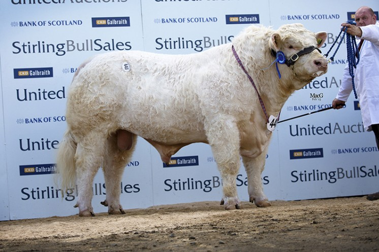 Burnside Indian at 16,000gns