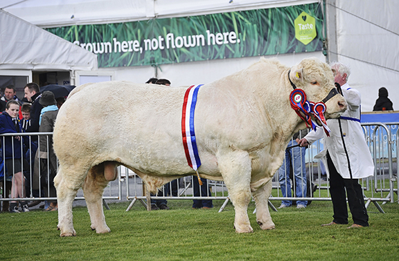 Sportsmans Columbo, the Suoreme Charolais with Andy Patterson