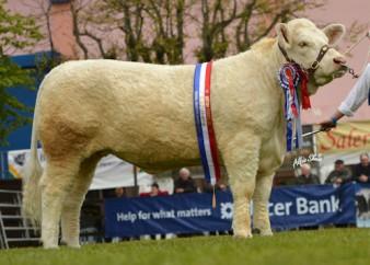 Cornascriebe Flo Reserve Champion of Champions at Balmoral