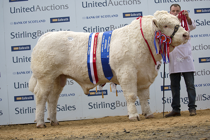 The Intermediate and Supreme Champion Culford Hector at 14,000gns
