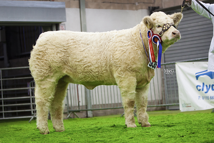 Falleninch Isabella, Junior Interbreed Champion