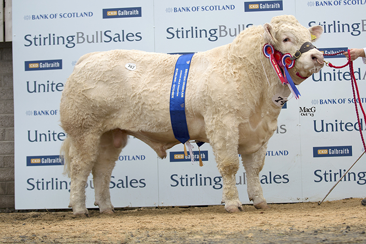 Goldies Hotspur at 14,000gns