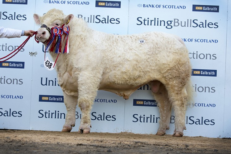 Goldies Ivan the Supreme Champion at 12,000gns