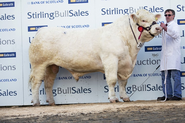 Gretnahouse Ivor at 11,000gns