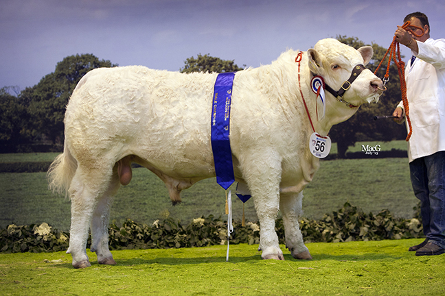 Male & Reserve Overall Champion Culford Hector from D & D Knox