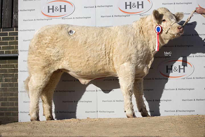 Midas Heather the Overall Cracker Female Champion sold for 3,900gns