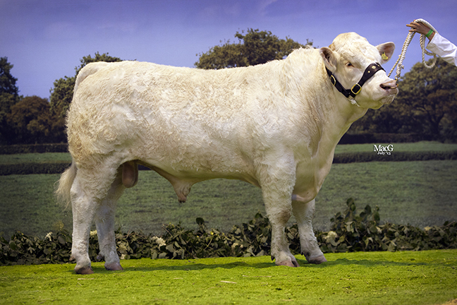 Mr & Mrs A White Balbithan Hanibal won class 6