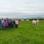 Albert Connolly heads a walk round the cattle