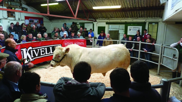 Philip Heard sold Meldon George for 3,400gns