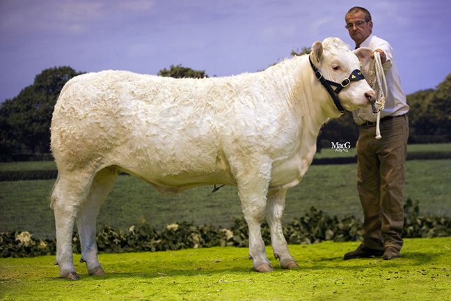 Shamleys Honey, won class 4 for NM Robinson jnr