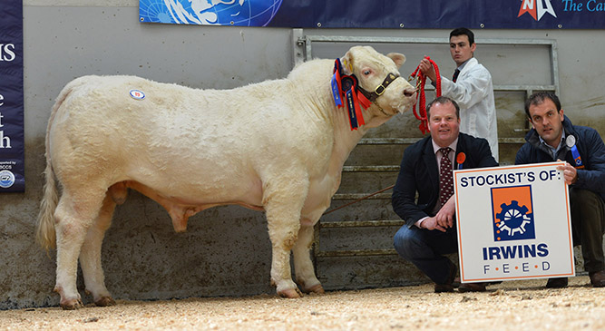 Solitude Hannibal 3,600gns Reserve Supreme Champion owned by J W McMordie with judge David Connolly, Ian Cummins Irwins Feeds