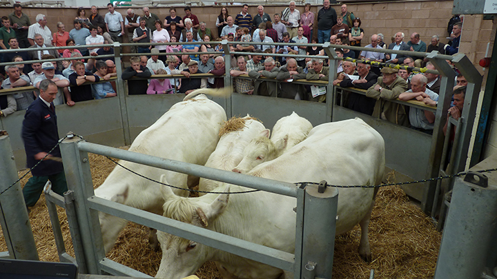The first lot into the ring, Louis Celandine sold for 3,400 gns at the Louis dispersal sale on behalf of Messrs Staddon