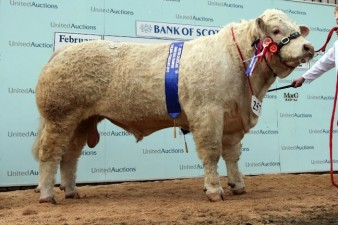 Blelack Forester at 22,000gns