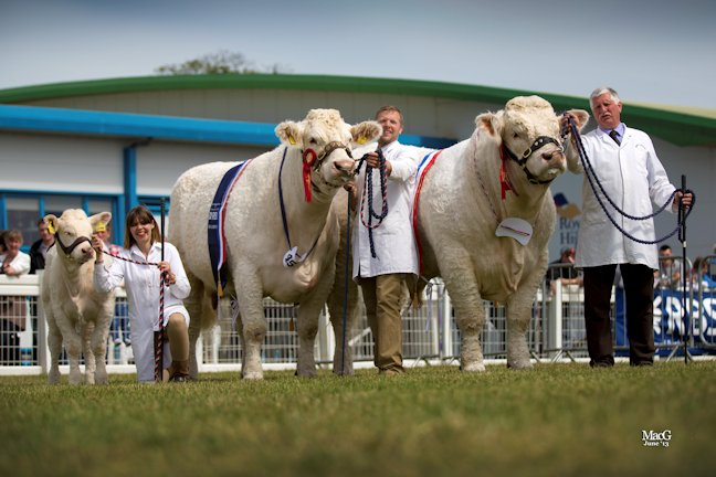 Elgin Catherine and Maerdy Grenadier were the Charolais champion and reserve and went on to win the Beef Pairs interbreed championship