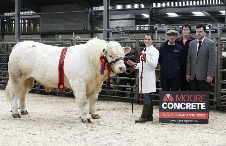Kathryn Marshall exhibiting the champion Crosskeys Gomesy, accompanied by Cameron Marshall, Keri McGivern of Moores Concrete and judge Danny McKay