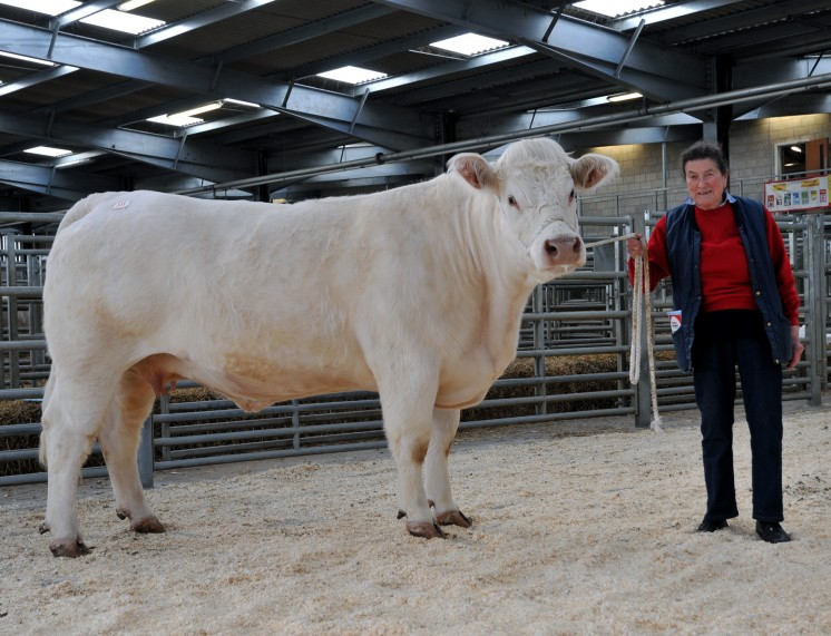 Waterfall Ellierose at 5,200gns