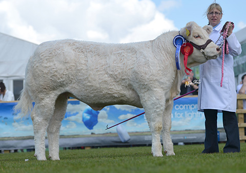 Sandra Middleton exhibits Hollywell Harmony Reserve Female Champion at Balmoral