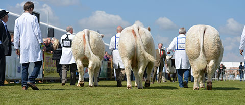 Winning Interbreed group Pubble Goldie, Coolnaslee Diane & Rumsden Fawkes