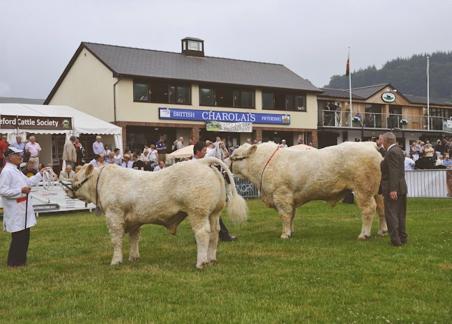 Peter Donger awarded Barnsford Ferny the male and supreme championship with Charbron Heredity ultimately placed reserve supreme