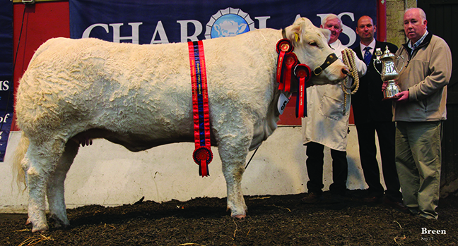 Coolnaslee Gracious Supreme Female in Show owned by GJ Crawford and exhibitied by Andy Patterson with Ian Bell Judge