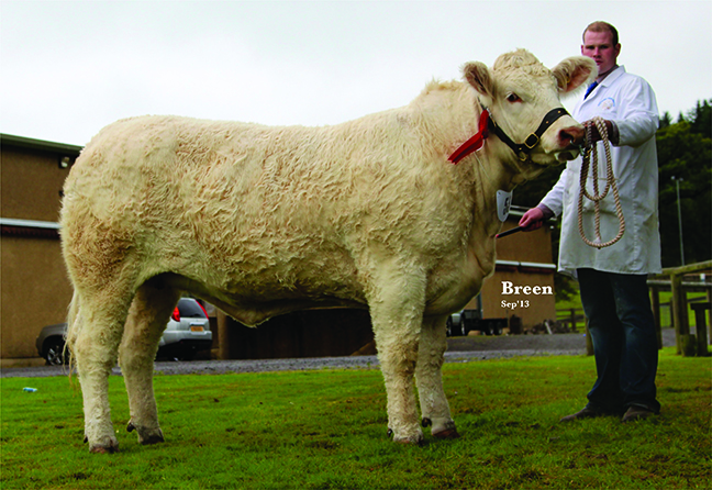 Coolnaslee Helga Intermediate Champion & class winner owned by Gilbert Crawford