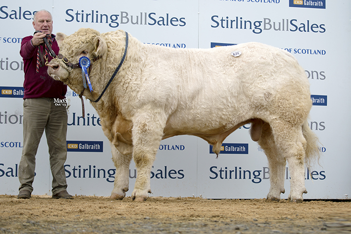 Derryharney Happyharry sold for 7,000gns