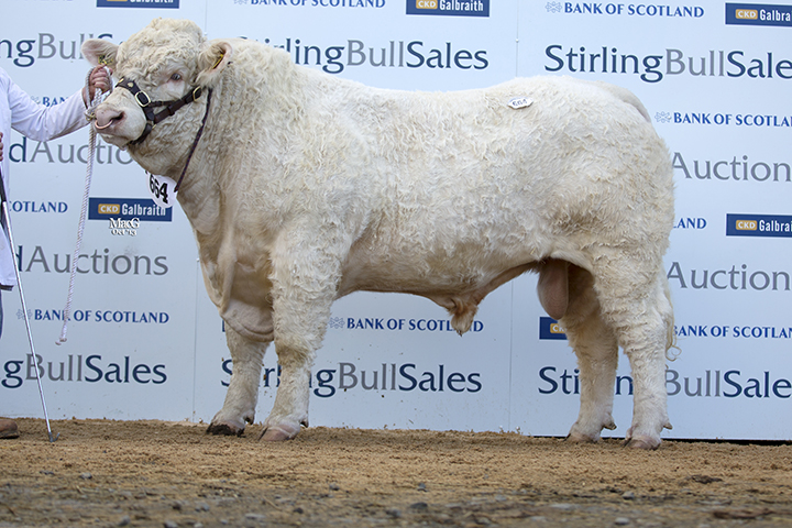 Gretnahouse Hasty at 8,000gns