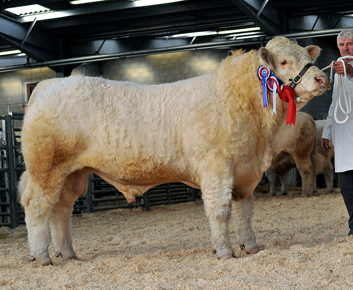 Overall Reserve Champion, Seawell Harvey at 4,000gns