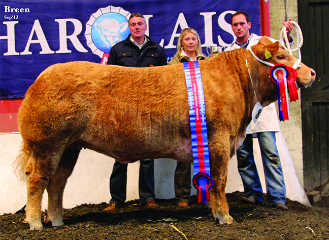 Supreme Commercail Champion at National Charolais Show owned by S & K Willaimson with judge Sharon Rothwell & Sponsor Keith