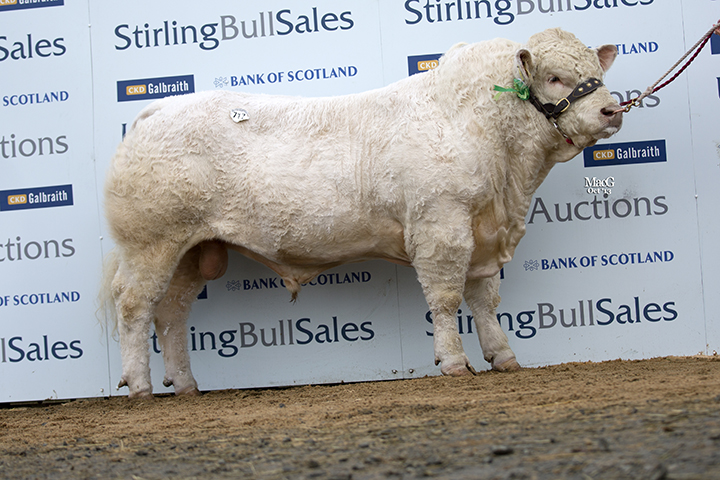 Thrunton Hawkwind sold for 9,000gns