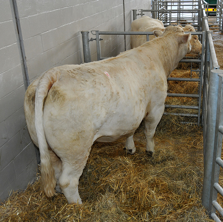 Trefonnen Veronica at 5,000gns