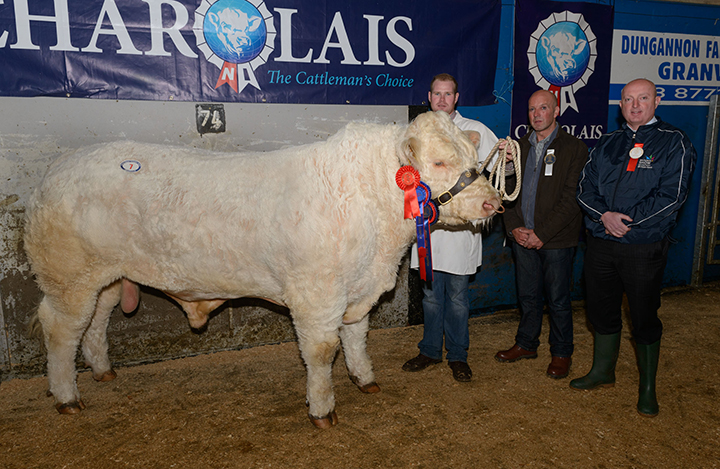 Reserve Male Champion, Coolnaslee Harper at 4,300gns