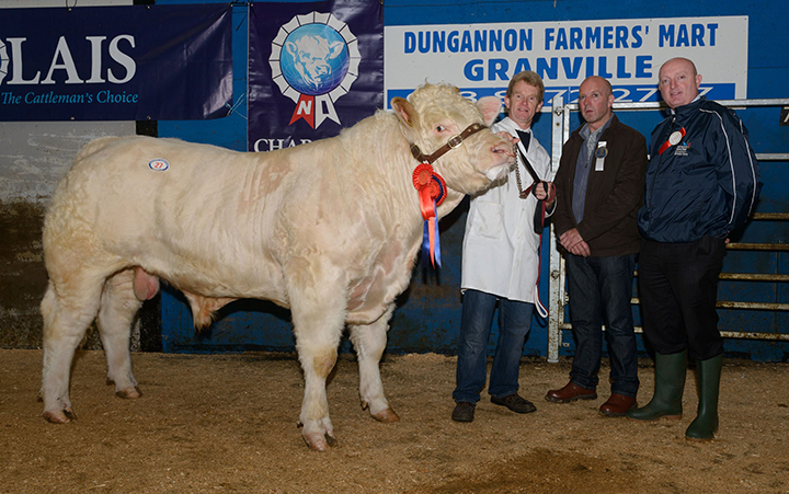 Junior male champion, Parkview Hustler at 4,700gns