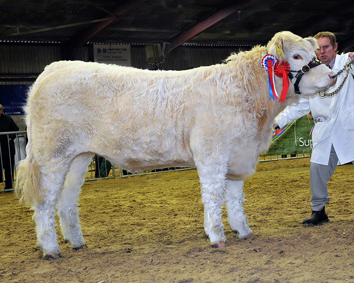 Junior Champion Sackville Highness BA & PT Heath