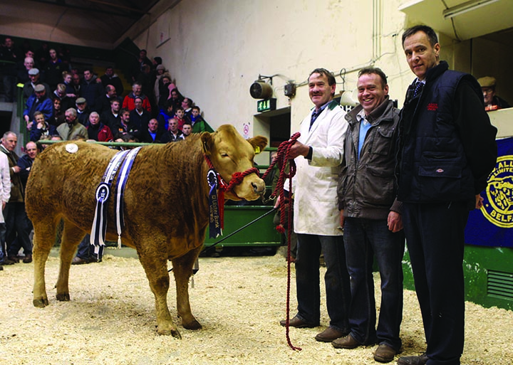Overall Reserve Supreme Champion owned by Declan & Fergal McKenna, Clogher with Cormac McKervey Ulster Bank main sponsor of event