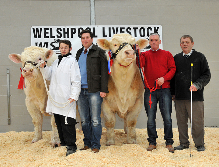 From left to right: Tom Boden with the Champion bull Sportsmans Harrypotter, the judge Stuart Barclay and Jimmy McMillan and Richard MacInnes with the reserve champion Twomacs Hitman