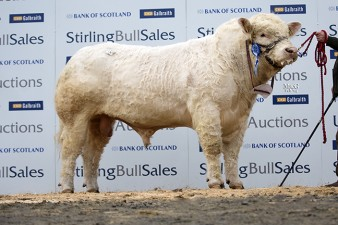 Allanfauld Highlight,  12,000gns