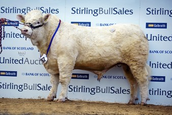 Westcarse Highlight, 8,000gns