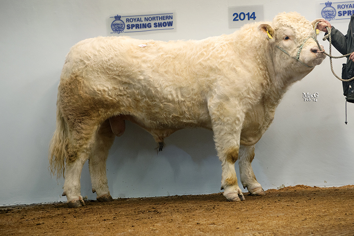 Kinclune Hayday, Sale leader at 6,900gns