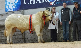 Burnside Iceberg 8,000gns Supreme Champion