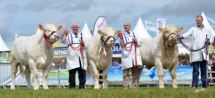 Coolnaslee Harmony, Coolnaslee Helga and Coolnaslee Ivanhoe the winning group of three Charolais owned by Gilbert Crawford